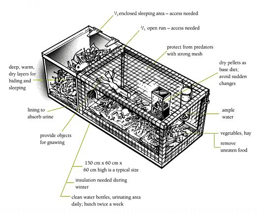 hutch diagram    rabbits    animal care    caring for animals