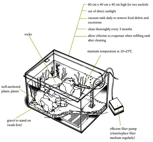 fish tank filters diagram  fish  free engine image for